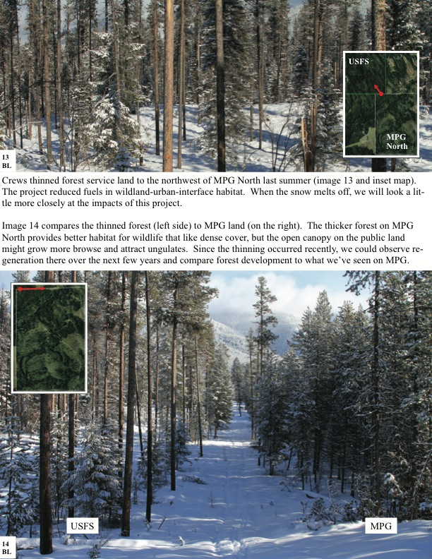 Crews thinned forest service land to the northwest of MPG North last summer (image 13 and inset map). The project reduced fuels in wildland-urban-interface habitat. When the snow melts off, we will look a lit- tle more closely at the impacts of this project.