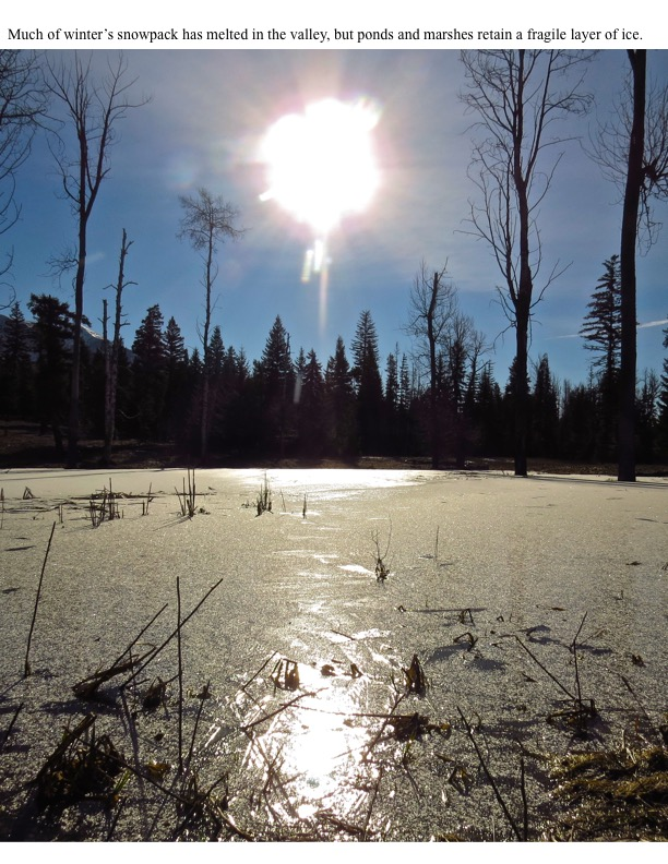Much of winter's snowpack has melted in the valley, but ponds and marshes retain a fragile layer of ice.