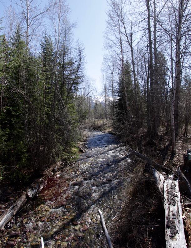 Cooney Creek