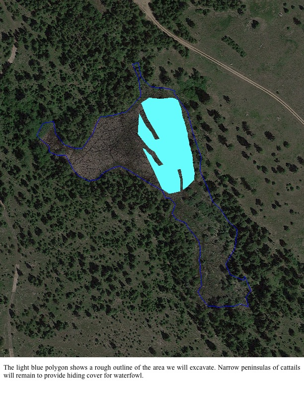 The light blue polygon shows a rough outline of the area we will excavate. Narrow peninsulas of cattails will remain to provide hiding cover for waterfowl.