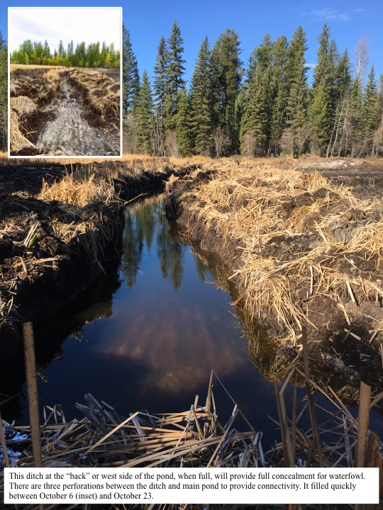 "This ditch at the ""back"" or west side of the pond, when full, will provide full concealment for waterfowl."