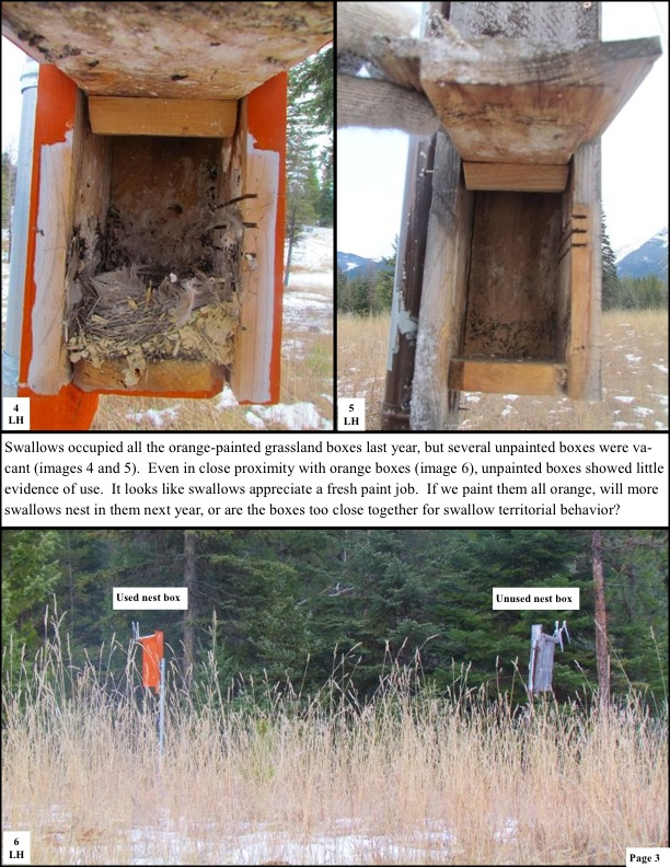 Swallows occupied all the orange-painted grassland boxes last year, but several unpainted boxes were va- cant (images 4 and 5). Even in close proximity with orange boxes (image 6), unpainted boxes showed little evidence of use. It looks like swallows appreciate a fresh paint job. If we paint them all orange, will more swallows nest in them next year, or are the boxes too close together for swallow territorial behavior?
