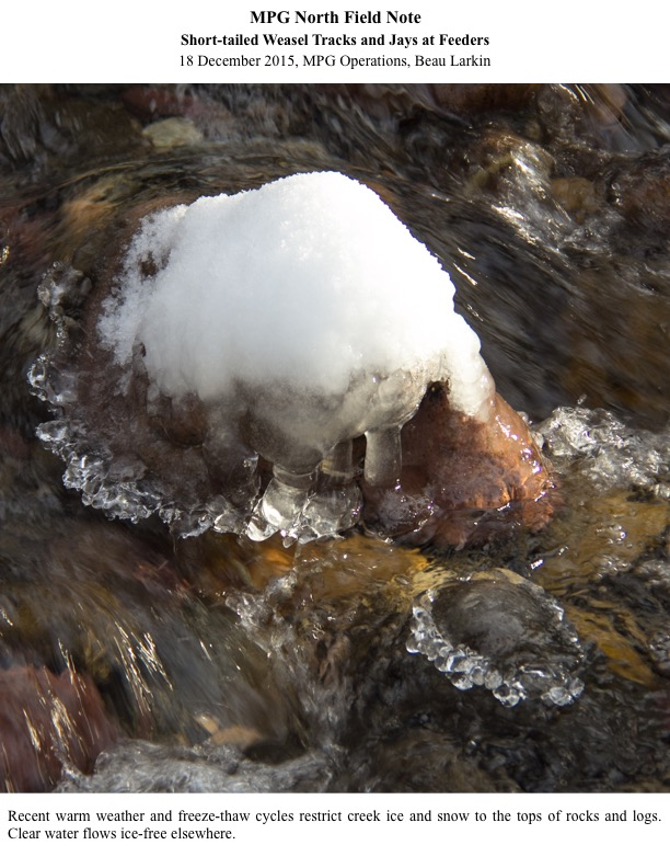 Recent warm weather and freeze-thaw cycles restrict creek ice and snow to the tops of rocks and logs. Clear water flows ice-free elsewhere.