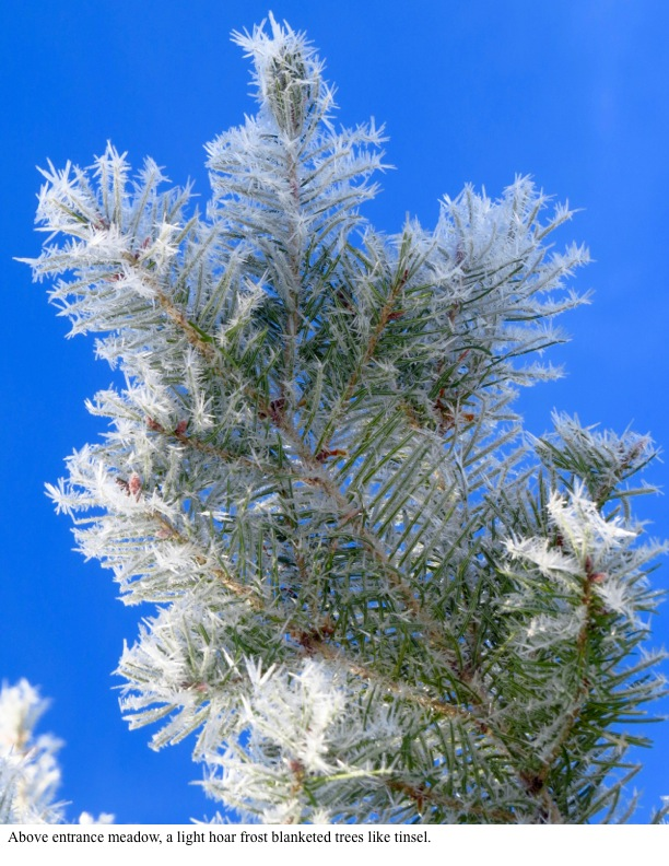 Above entrance meadow, a light hoar frost blanketed trees like tinsel.
