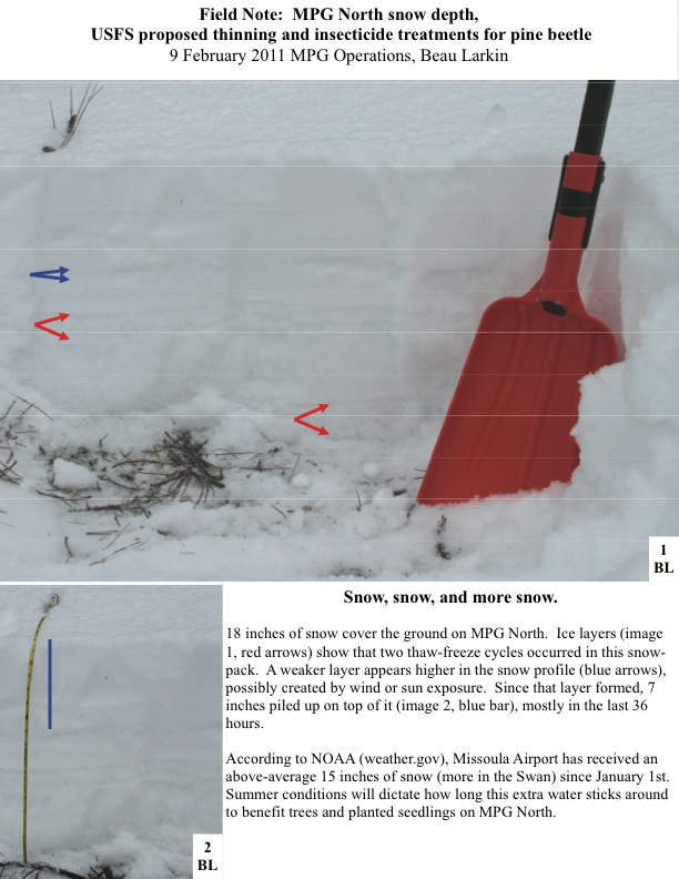 Field Note: MPG North snow depth, USFS proposed thinning and insecticide treatments for pine beetle 9 February 2011 MPG Operations, Beau Larkin Snow, snow, and more snow. 18 inches of snow cover the ground on MPG North. Ice layers (image 1, red arrows) show that two thaw-freeze cycles occurred in this snow- pack. A weaker layer appears higher in the snow profile (blue arrows), possibly created by wind or sun exposure. Since that layer formed, 7 inches piled up on top of it (image 2, blue bar), mostly in...