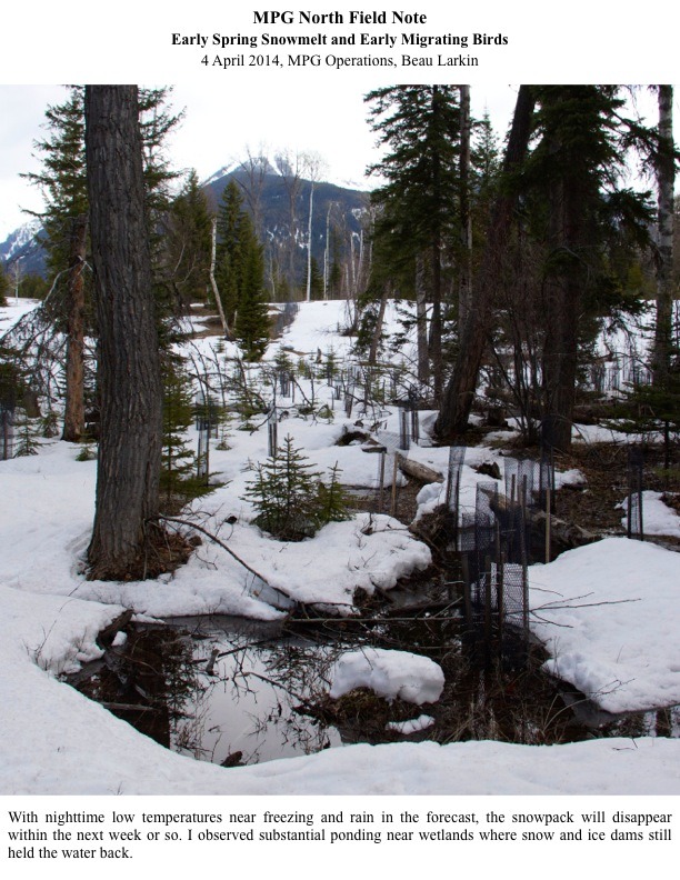 With nighttime low temperatures near freezing and rain in the forecast, the snowpack will disappear within the next week or so. I observed substantial ponding near wetlands where snow and ice dams still held the water back.