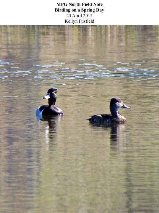 MPG North Field Note Birding on a Spring Day