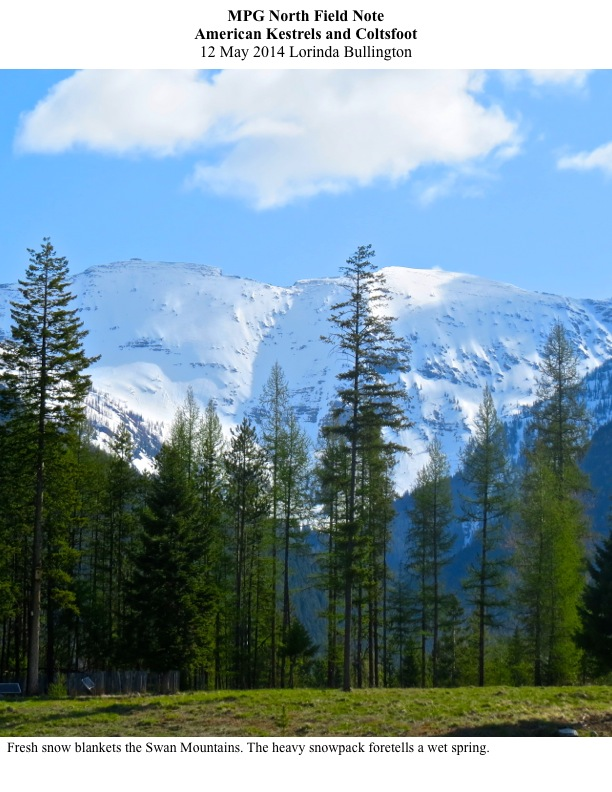 Fresh snow blankets the Swan Mountains. The heavy snowpack foretells a wet spring.