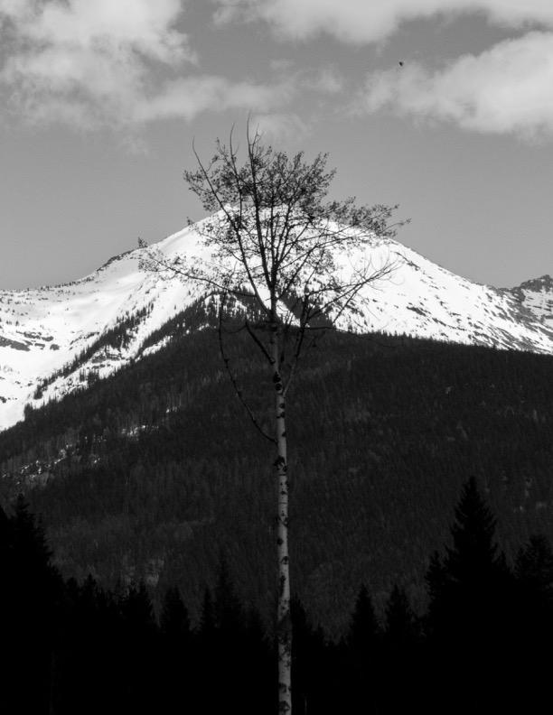 Black and white peak