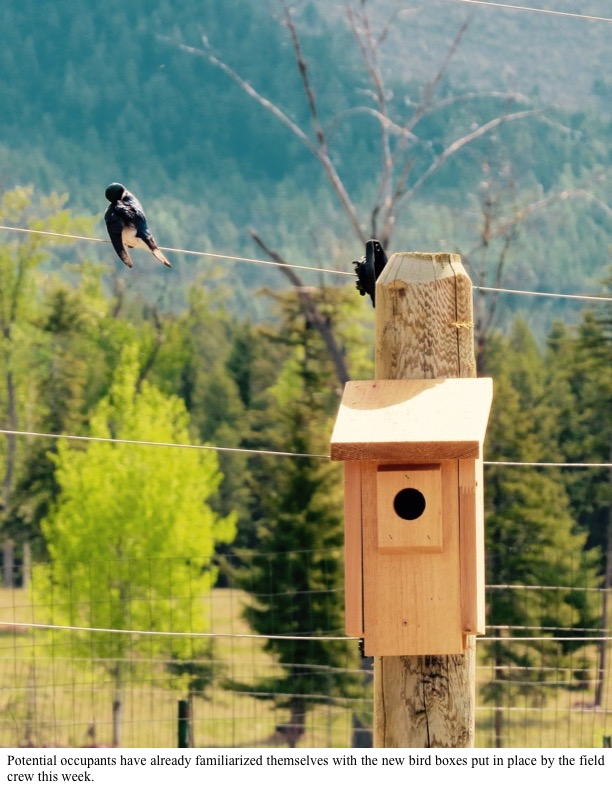 Potential occupants have already familiarized themselves with the new bird boxes put in place by the field crew this week.