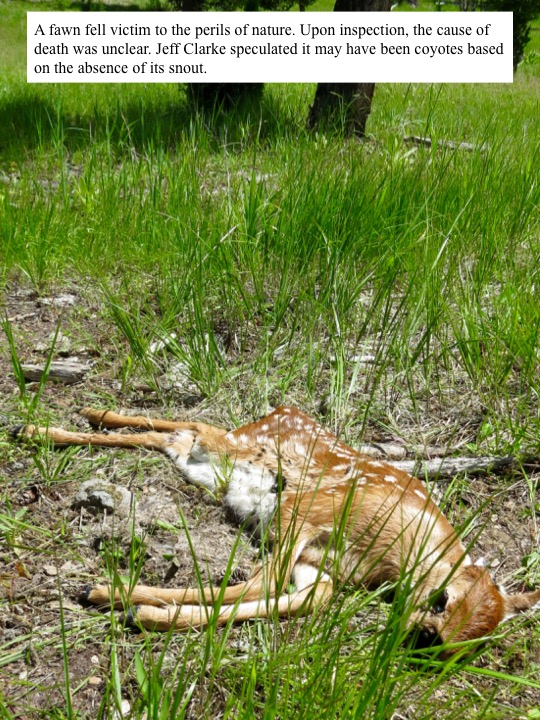 A fawn fell victim to the perils of nature.