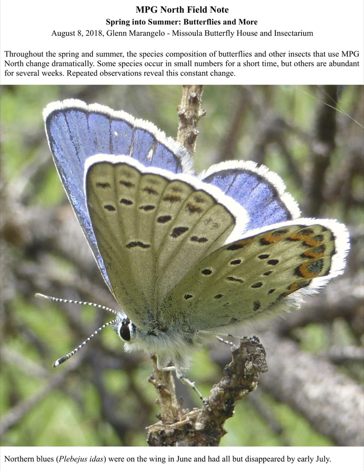 Throughout the spring and summer, the species composition of butterflies and other insects that use MPG North change dramatically.