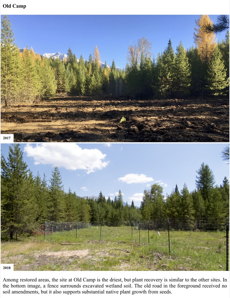 Among restored areas, the site at Old Camp is the driest, but plant recovery is similar to the other sites. In the bottom image, a fence surrounds excavated wetland soil.
