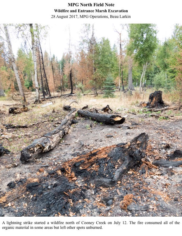 A lightning strike started a wildfire north of Cooney Creek on July 12. The fire consumed all of the organic material in some areas but left other spots unburned.
