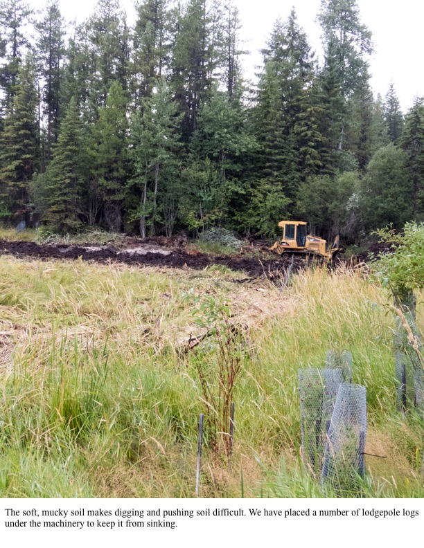 The soft, mucky soil makes digging and pushing soil difficult. We have placed a number of lodgepole logs under the machinery to keep it from sinking.
