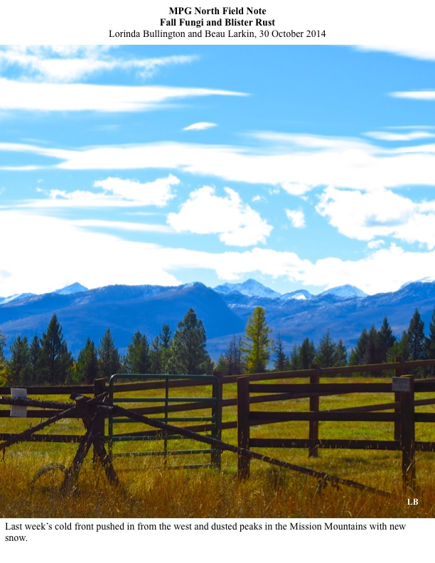 Last week's cold front pushed in from the west and dusted peaks in the Mission Mountains with new snow.