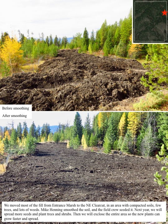 We moved most of the fill from Entrance Marsh to the NE Clearcut, in an area with compacted soils, few trees, and lots of weeds.